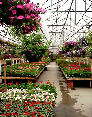Annuals Greenhouse