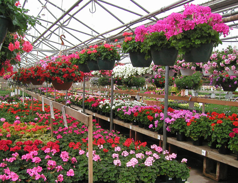 Echters Nursery Garden Center