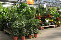 Your Complete Nursery, Garden Center And Patio Store. Open Year Round. Shop  In The Comfort Of Our Huge Greenhouses Filled With Dazzling Flowers.