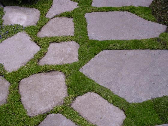 Stepables Groundcovers